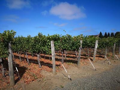 Kisah Ladang Anggur Roger Barnett