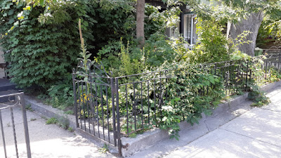 Beaconsfield Village Toronto front yard summer garden cleanup before by Paul Jung Gardening Services--a Toronto Organic Gardener