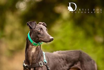 Dirtie Dog Photoggraphy