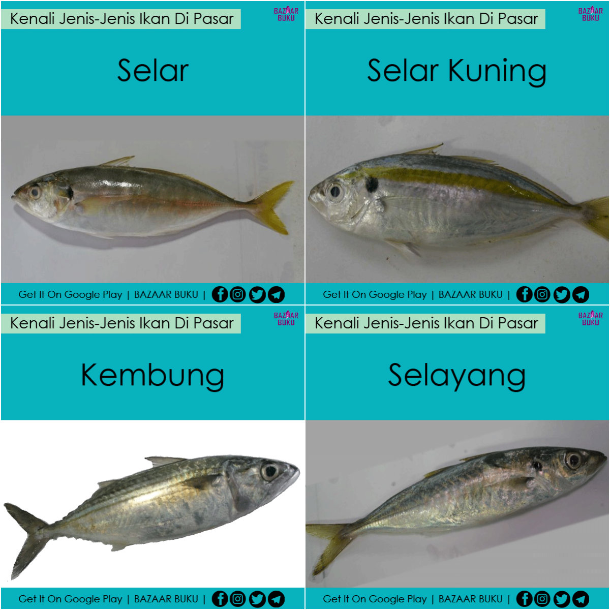 Jenis Jenis Ikan Di Pasar Aneka Ikan Hias