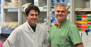 Researchers Modify Macrophages To Accelerate Wound Healing