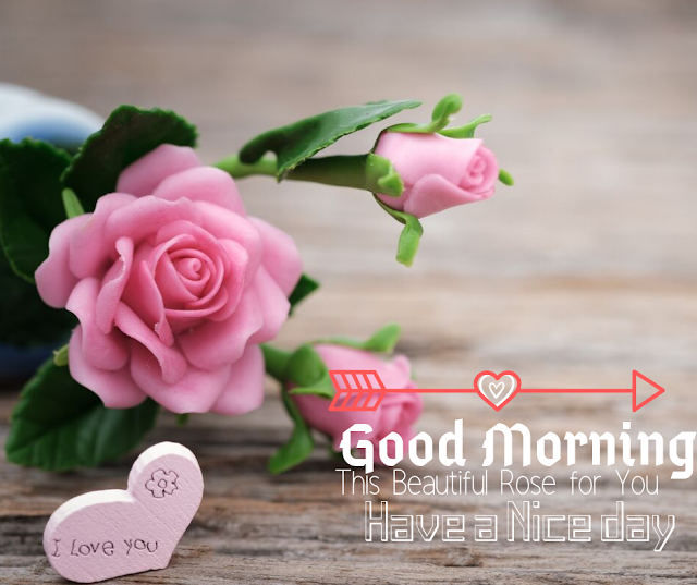 Good Morning Images with Pink color  Rose