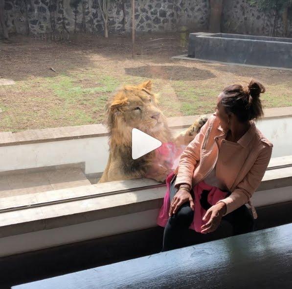 Jasmine Tookes: la supermodella impressionata dall'imboscata d'amore di Re Leone | Video Divertente Instagram