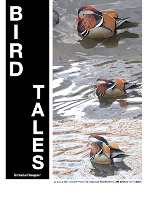 """This image is of the cover for my book, """"BIRD TALES."""" It has three views of the Mandarin duck who visited NYC. Info for the book is @ https://apple.co/3oF2CX8"""