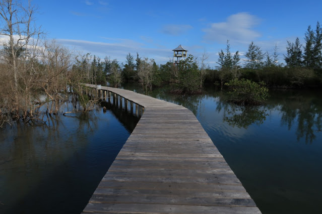 Mangrove Belitung