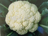 manfaat sayur kembang kol, bunga kol, jual benih bunga kol, benih sakata seed, benih white shot, toko pertanian, toko online, lmga agro