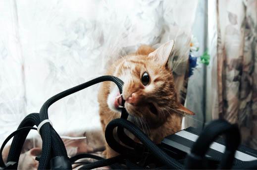Co zrobić gdy kot gryzie kable?
