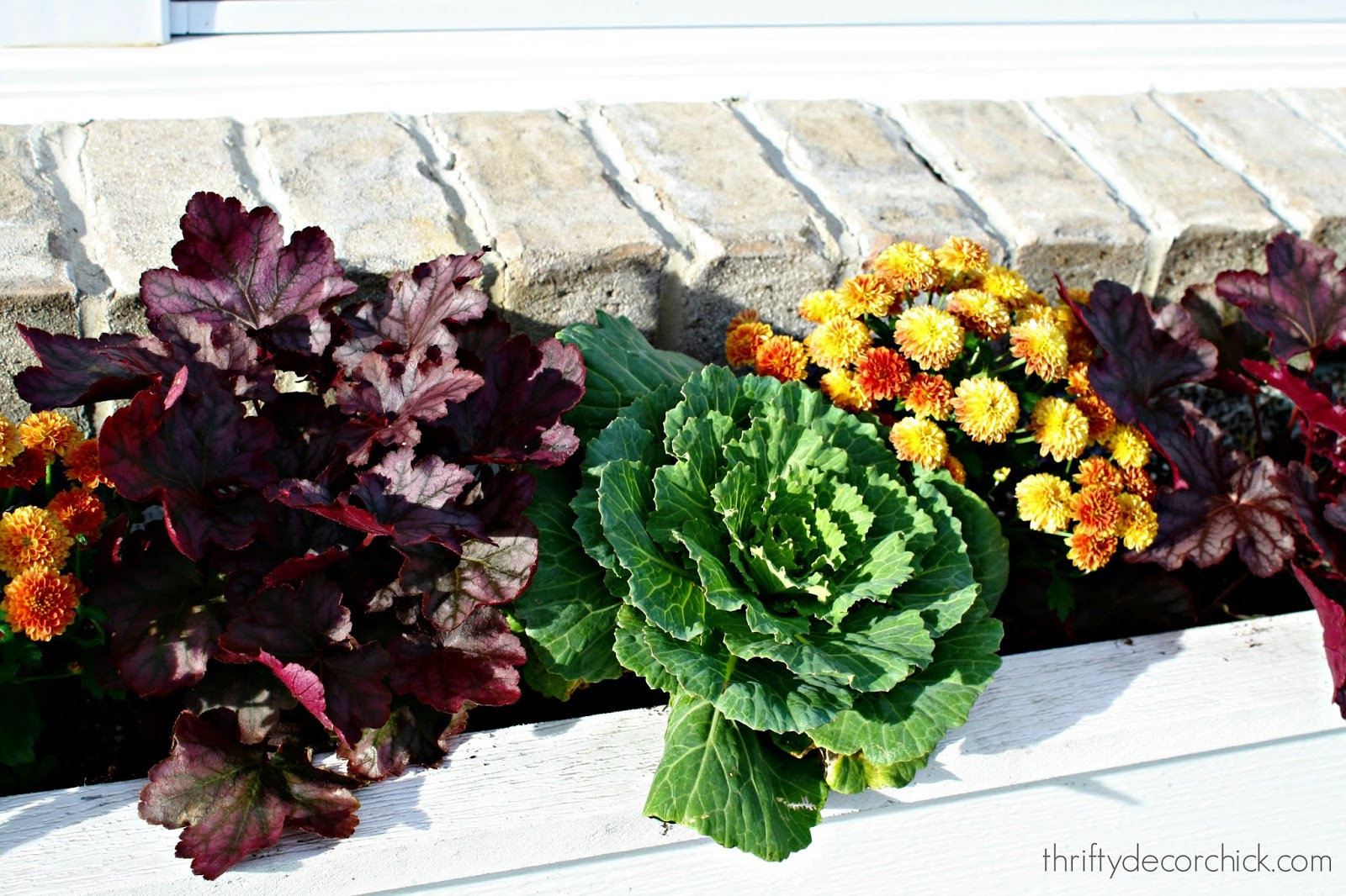 Plants for fall window boxes