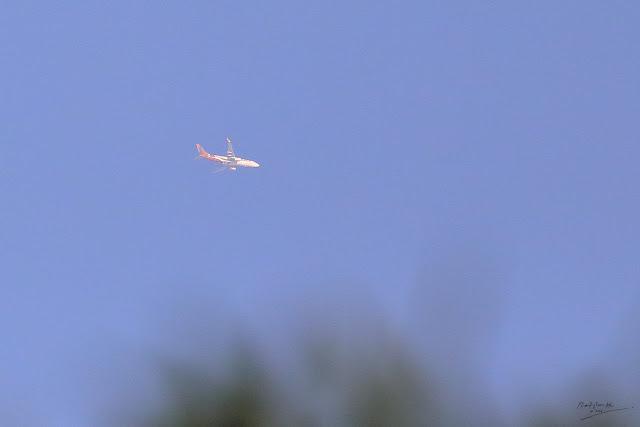 AirAsia aircraft, Birding during Eid-Adha Holiday