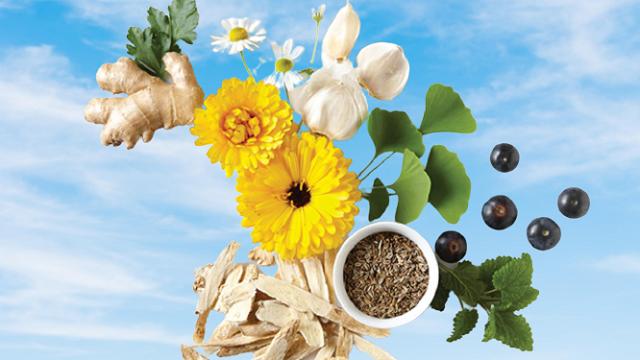 Herbal Heeling For Everybody