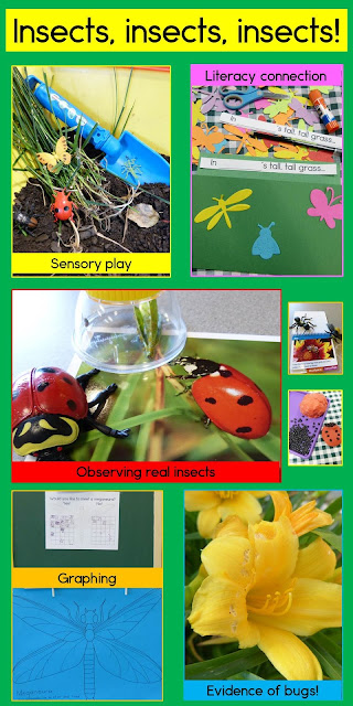Insects, bugs and things that creep: Science, literacy and math activities for preschool (with a healthy dose of sensory fun!)