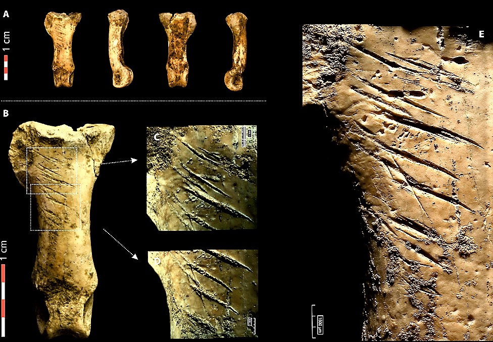 Neanderthals of Cova Foradada bones.