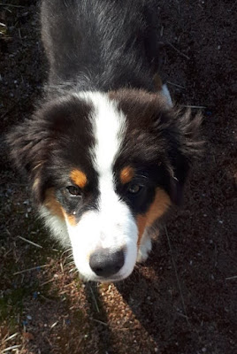 educateur canin annecy faverges ugine thones albertville