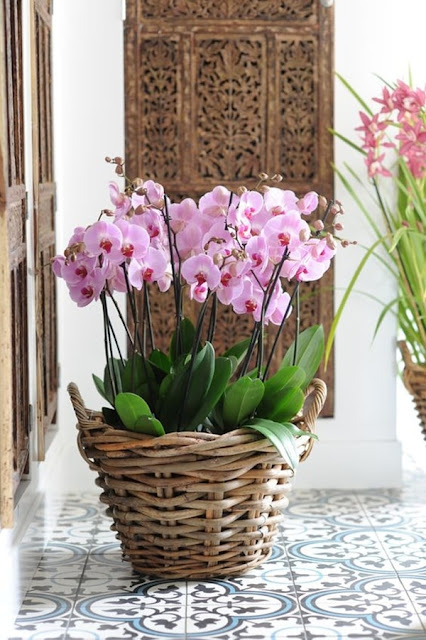 Ideas To Decorate Interiors With Plants 5