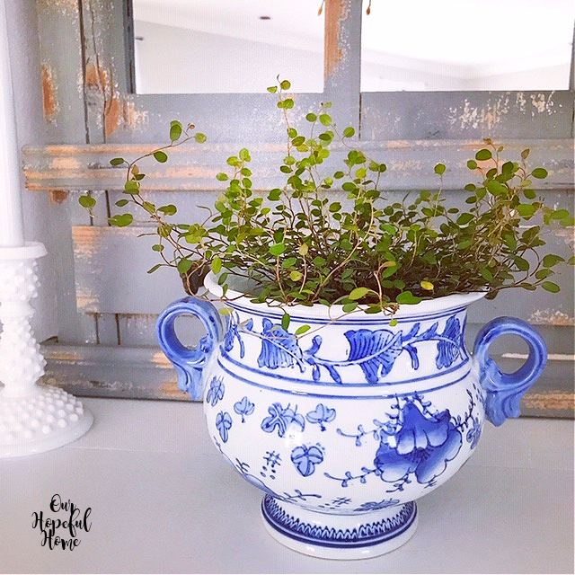 delicate handled chinoiserie cachepot green plant