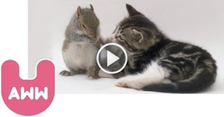Cat Decides to Adopt Orphaned Baby Squirrels That Fell From The Tree!