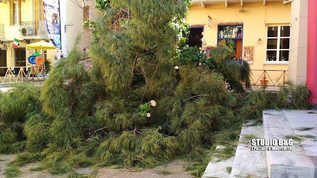 Έπεσε δέντρο στην πλατεία Συντάγματος στο Ναύπλιο