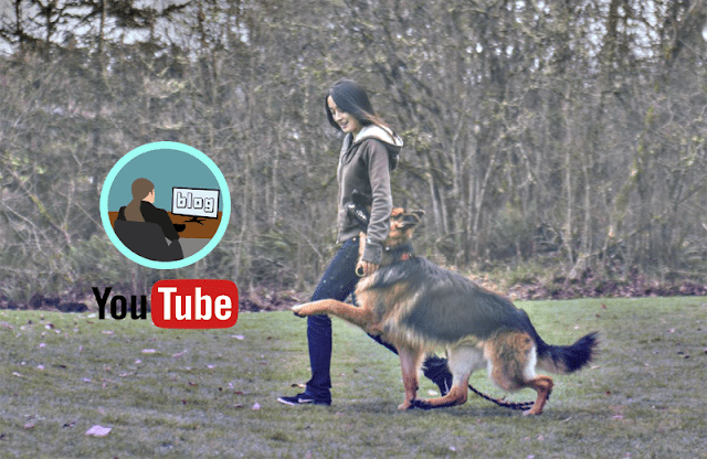 Create A YouTube Channel & Blog On Pets & Make Money Online 0