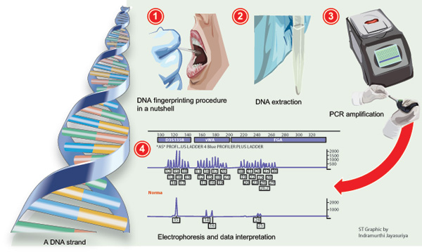 the concept and role of dna fingerprinting in solving crimes Dna goes to court | dna profiling is playing a growing role in solving crimes,  twenty years after the development of dna fingerprinting, forensic dna.