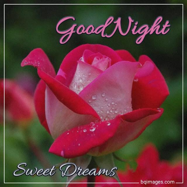 good night red rose