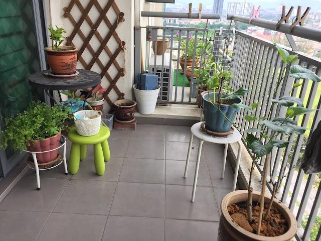Balcony - Tanam pokok yang boleh dimakan.