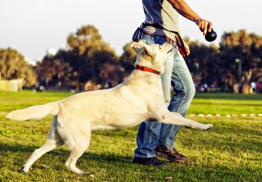 Kliker, czyli jak łatwo wyszkolić psa?