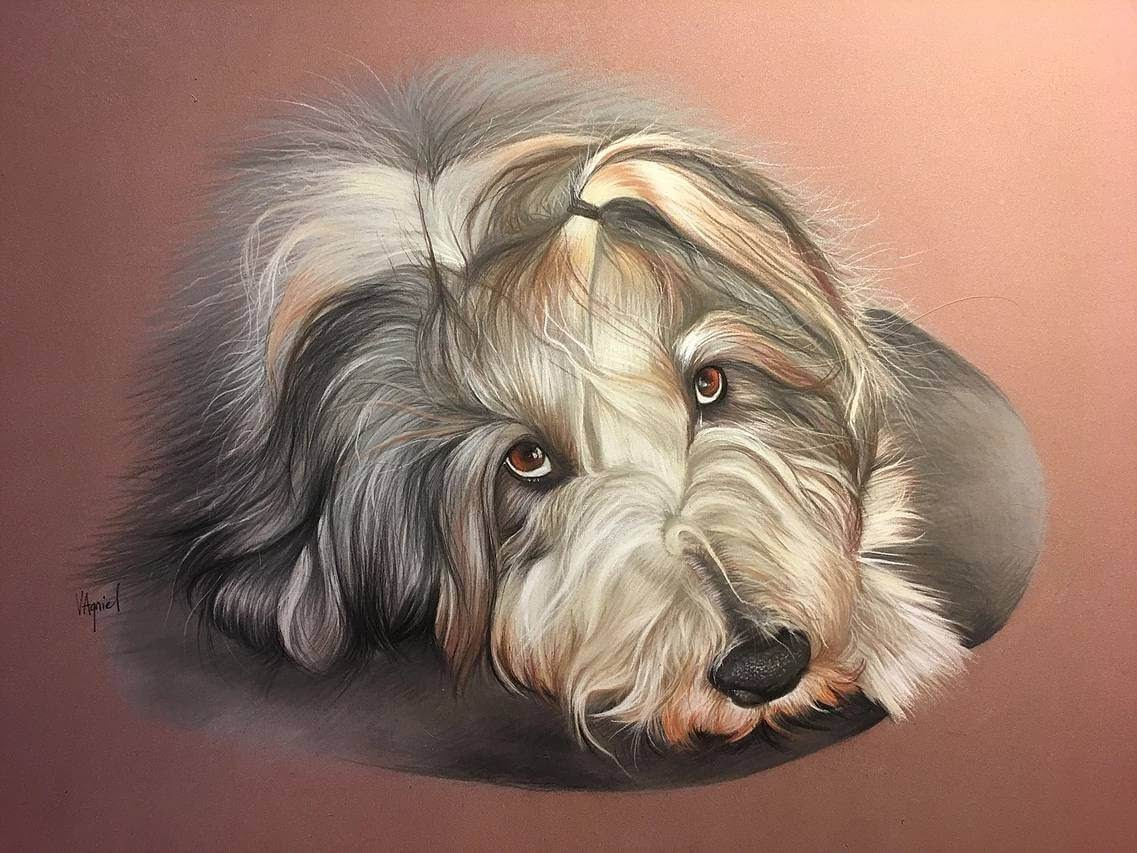 10-Bearded-Collie-Virginie-Agniel-Pastel-Drawings-of-Cats-and-Dogs-www-designstack-co