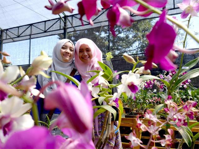 Bunga Anggrek yang Cantik di Kampung Anggrek