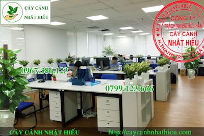 Cho thuê cây cảnh văn phòng giá rẻ nhất tại Hà Nội