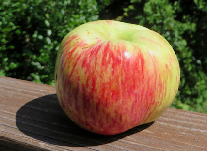 Striped ribbed apple