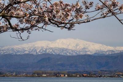 Kaga Katayamazu Onsen Cherry Blossom