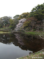 Landscape reflecting in a calm pond - Tokyo Imperial Gardens, Japan
