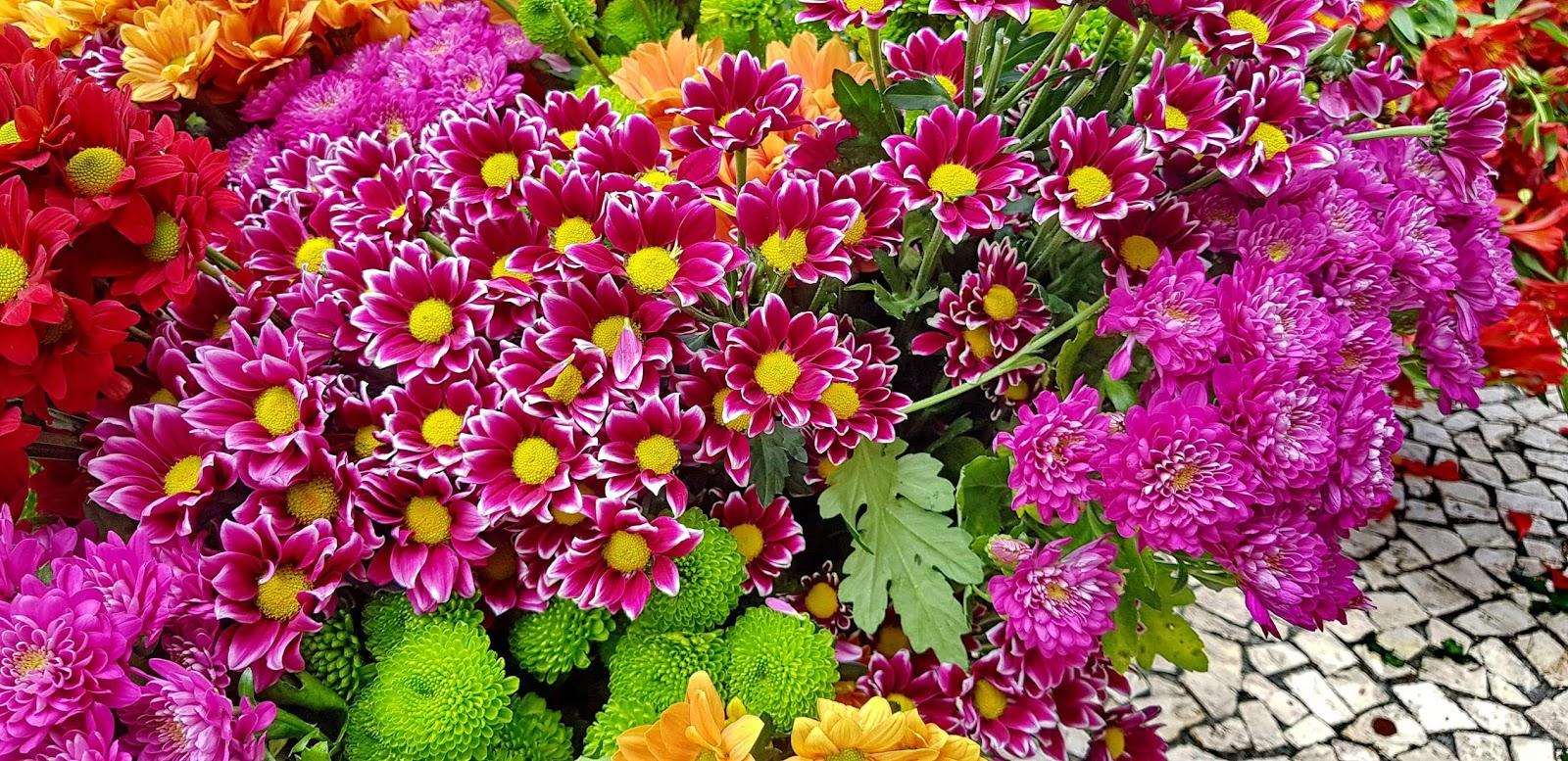 flores no passeio