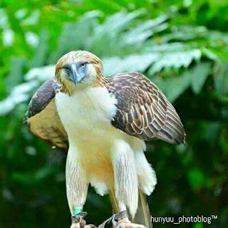 The Philippine Eagle Center