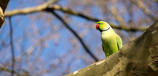 Parrot ki photo