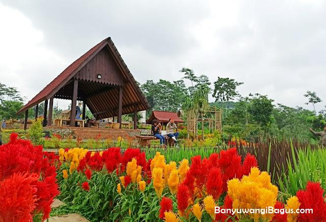 Agrowisata Taman Suruh kabupaten Banyuwangi.