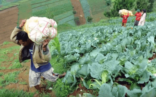 Jual Beli Hasil Pertanian dan Perkebunan