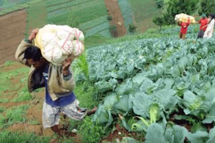 7 Peluang Usaha di Desa yang Sudah Terbukti Menguntungkan