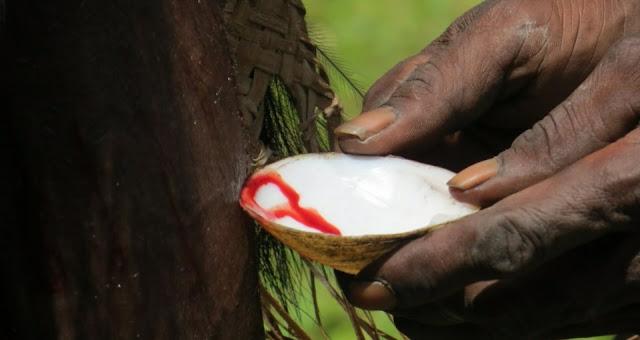 Bahas Ararem dan Tifa Darah, Budaya Papua yang Unik