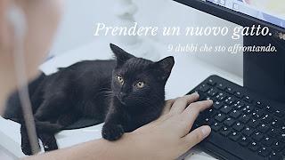 problemi adottare nuovo gatto