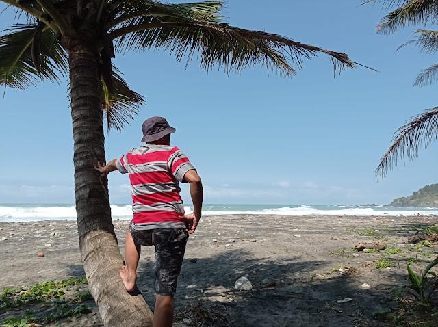 pantai pecaron indah dan pohon kelapa