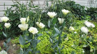 http://blog.rezvanflower.ir/