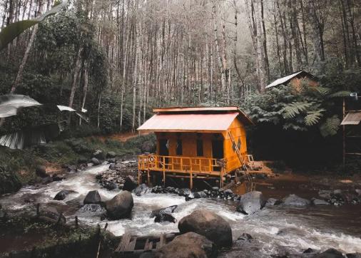 Pesona Wisata Alam Hutan Pinus Di Kampung Singkur Pangalengan
