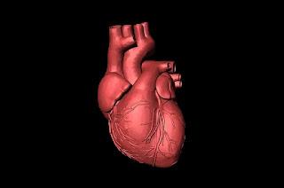 Otot jantung berkontraksi dalam dua tahap untuk membawa darah dari jantung. berikut ini mekanisme kerja jantung memompa darah