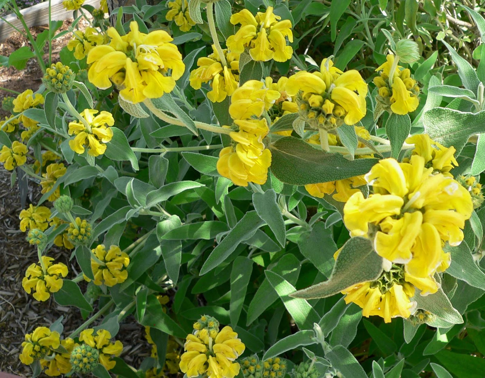 My Enchanting Cottage Garden 7 Rare And Unusual Plants For Your