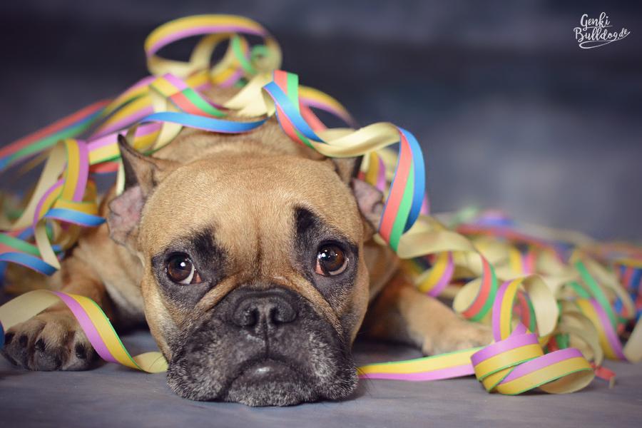 Hundeblog Hund Silvester Happy New Year Neujahr Foto Französische Bulldogge Luftschlangen