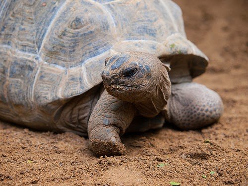 How the Tortoise overcame the Elephant and the Hippopotamus African Folktale