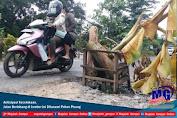 Antisipasi Kecelakaan, Jalan Berlobang di Jember Ini Ditanami Pohon Pisang