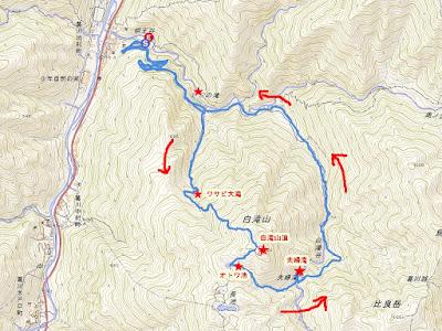 葛川町坊村登山口から反時計回りに白滝山、ワサビ大滝、夫婦滝、三の滝を巡りました