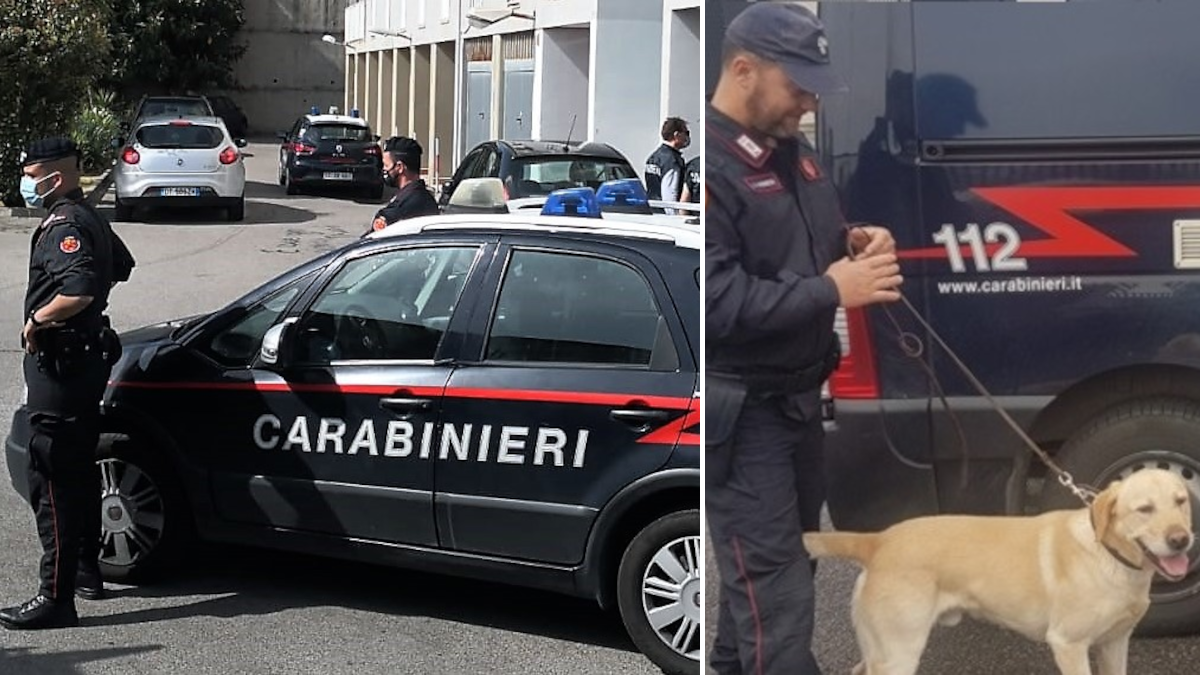 Librino cocaina Ivan cane antidroga Carabinieri